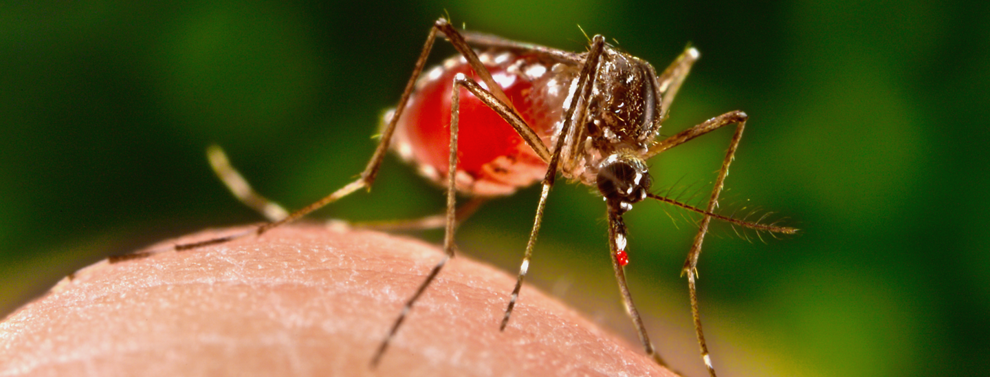 dengue fever essay in english Essay on dengue fever outlines (530 words) introduction history and prevalence of dengue in different countries symptoms causes treatment conclusion nowadays many people suffer from dengue.