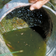 Emptying bucket to prevent mosquitoes from breeding. Credit: CDC.