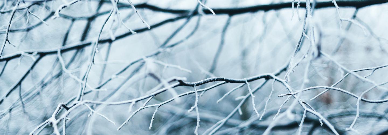 Winter branches. Credit: Anna Popovic.