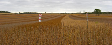 Multicolor soybean test plots in Ohio, planted by Croplan Genetics. A new APPC study shows conversion messages can sway public opinion on GM foods.
