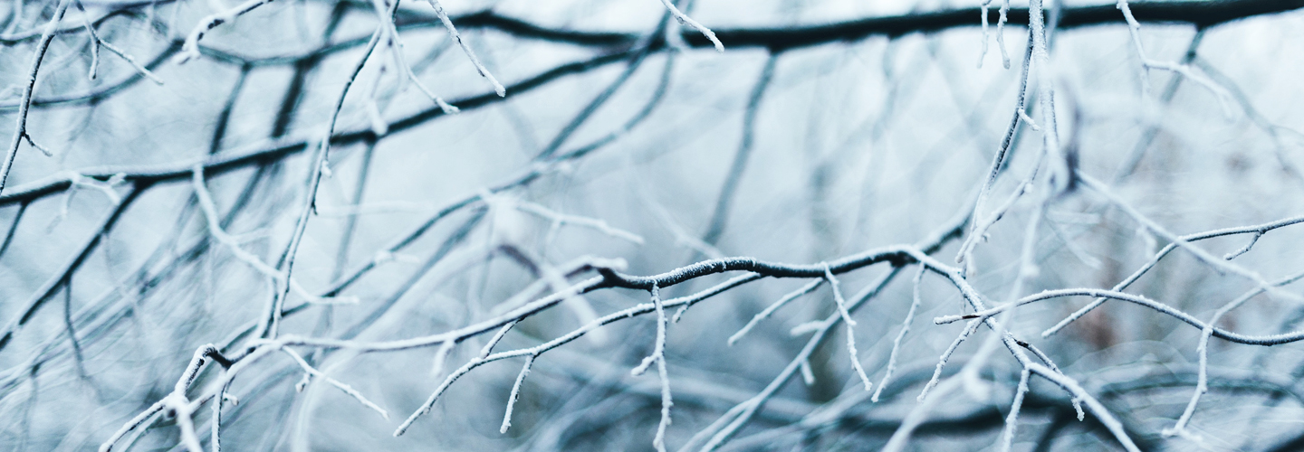 Winter branches. Credit: Anna Popovic.
